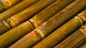 Desechos de caña de azúcar podrían ser fuente de etanol