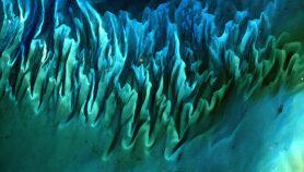 Algas marinas darían energía a islas tropicales