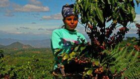 Digitalización llega al agro latinoamericano
