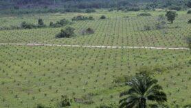 Convertir áreas de pastoreo para producir biocombustibles