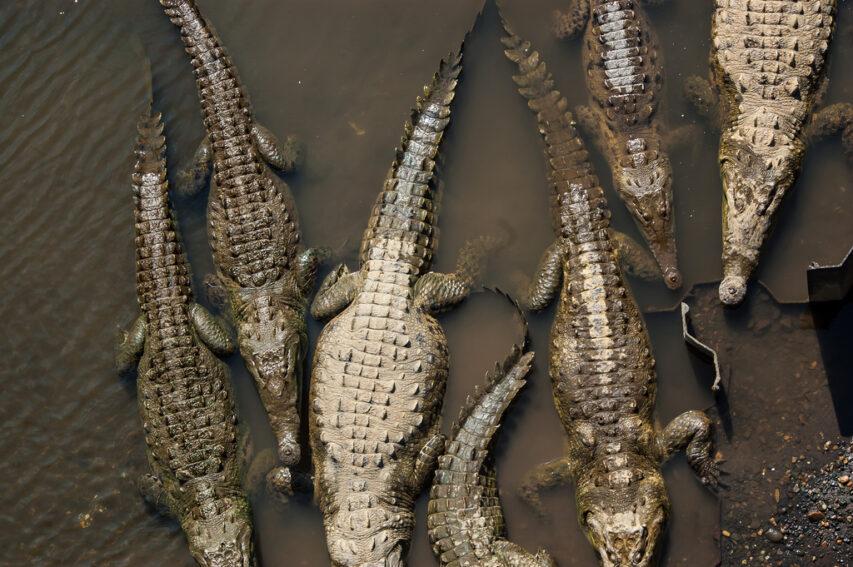 Crocs_WorldWideGifs.jpg