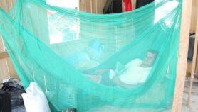 Tres países de la región premiados por combatir malaria