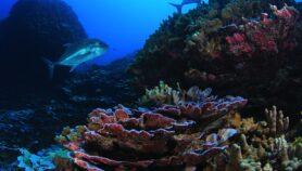 Belice: Ciencia y población se unieron para proteger costa