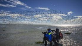 Latinoamérica lidera pérdida de humedales a nivel global