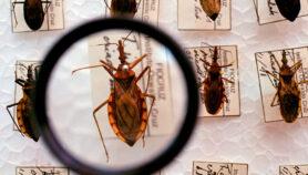 Enfermedad de Chagas podría transmitirse por vía sexual