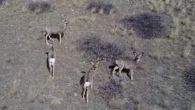 Drones: amenaza latente a la fauna silvestre