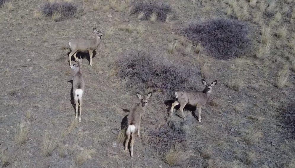Ciervos y drones