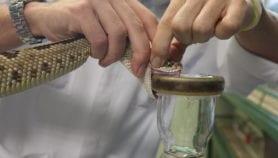 Antídotos de alta tecnología para la mordedura de serpientes