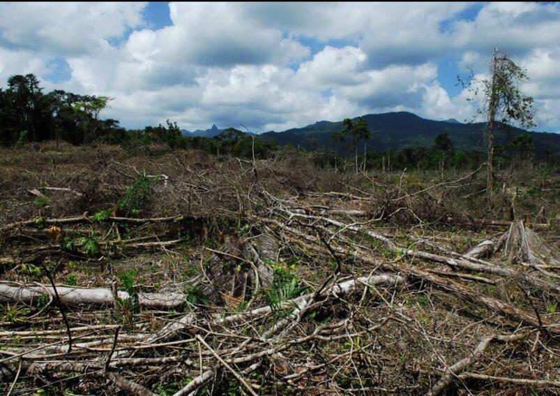 deforestacion-erik nielsen-northern arizona university
