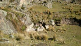 Argentina: ganadería podría convertir suelo en desierto