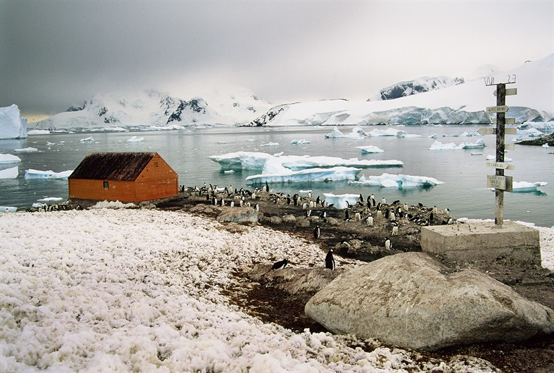 gentoo-penguin-colony-at-chilean-research-station-antarctic-peninsula_e42a-800x538px_GRID_Arendal