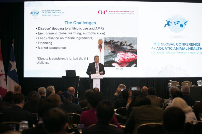 Global Conference on Aquatic Animal Health by OEI.jpg