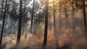 Incendios forestales provocados son un riesgo para población