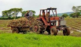 Brasileño premiado por cultivo sostenible de caña de azúcar
