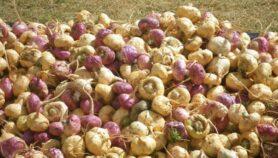 Perú denuncia a China por biopiratería de maca
