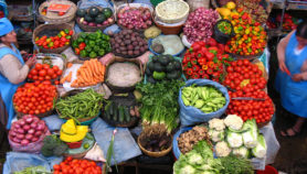 Población boliviana poco informada sobre biotecnología