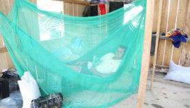 "Q&A: ""Eliminación de malaria en América Latina es absolutamente posible"""