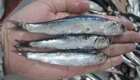 Pesquerías pueden reducir pérdidas con gestión más sostenible