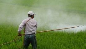Relacionan pesticidas con aumento de muertes por cáncer de colon