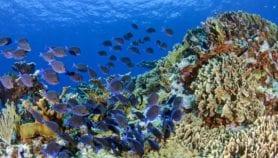 Diversidad de peces es clave para recuperar arrecifes
