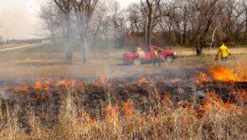 Carbón marrón reduce producción de ozono