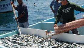 México: Atún de lata y cazón, fuente de metilmercurio