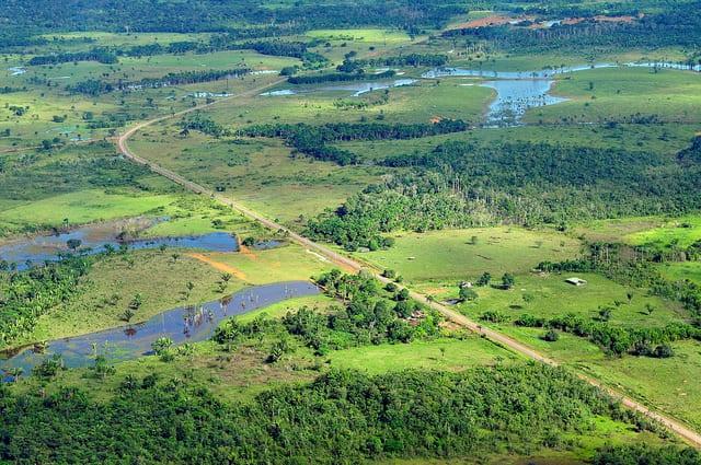 selva amazonica CIFOR