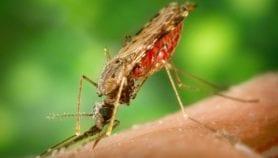 Con nuevo fármaco Brasil prevendrá recaídas de malaria