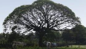 App colaborativa ayuda a identificar flora tropical