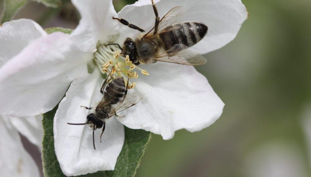 abeja trabajadora