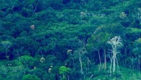 Invertir en cuidado del ambiente disminuye costos sanitarios