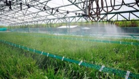 Arroz con menos agua y gases de efecto invernadero