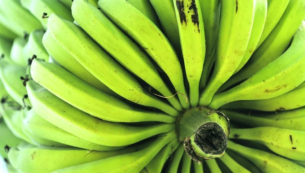 Banana Tumaini - Main