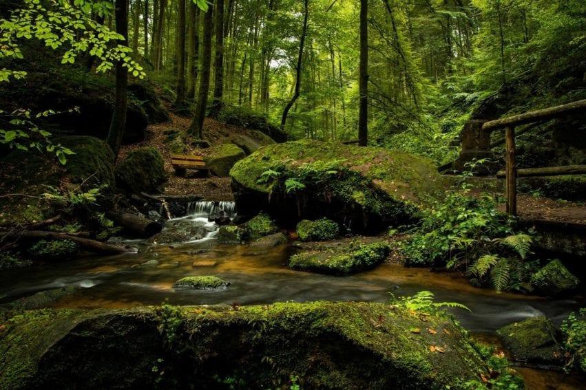 bench-cascade-creek-environment
