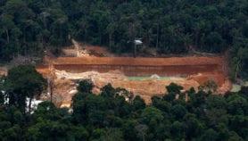El mundo pierde sus bosques aceleradamente