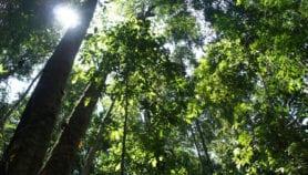 Bosques tropicales pueden soportar calentamiento global hasta cierto punto