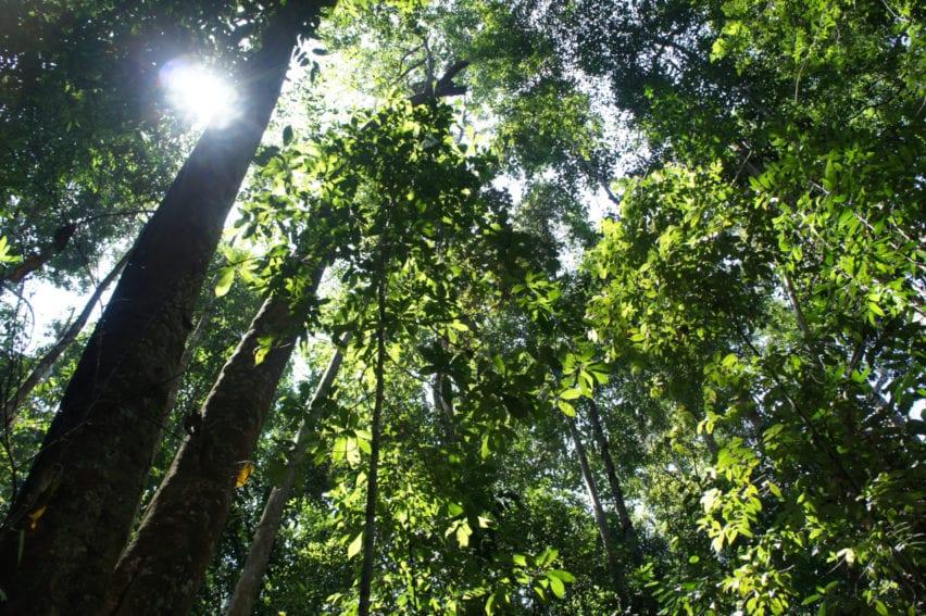 bosques tropicales1
