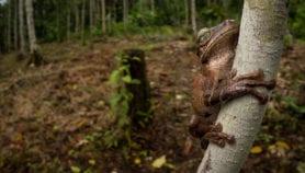 Deforestación en Colombia es causada por factores complejos