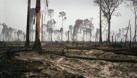 Deforestación en Amazonia sería peor de lo estimado