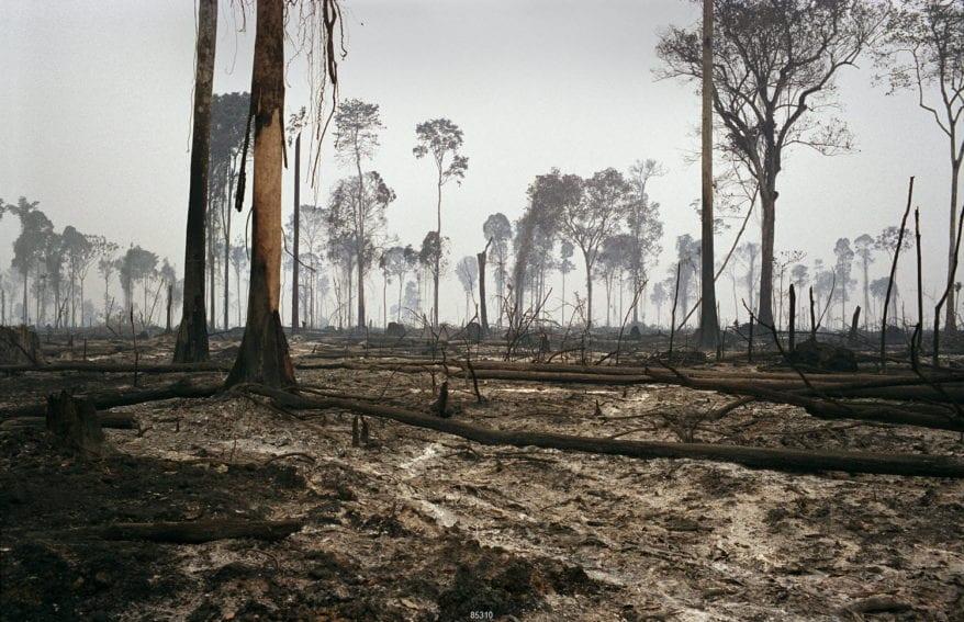 deforestación amazonia Panos