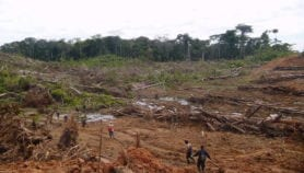 Deforestación aumenta riesgo de nuevas enfermedades