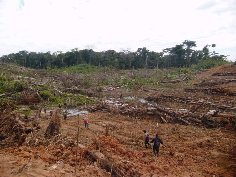 Deforestacion Tamshiyacu Loreto by SERFOR