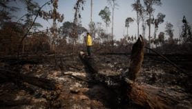 Degradación en la Amazonia es mayor que la deforestación