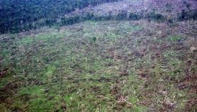 Brasil y Colombia como 'hotspots' de restauración forestal