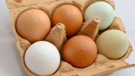 Nueva tecnología para extender vida útil del huevo
