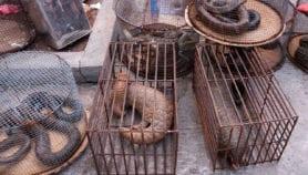 Consumir fauna silvestre aumenta riesgo de pandemias globales