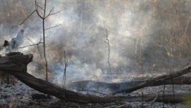 Incendios forestales dispersan enfermedades en Amazonía