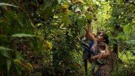 Garantizar derechos de los indígenas protege también el bosque