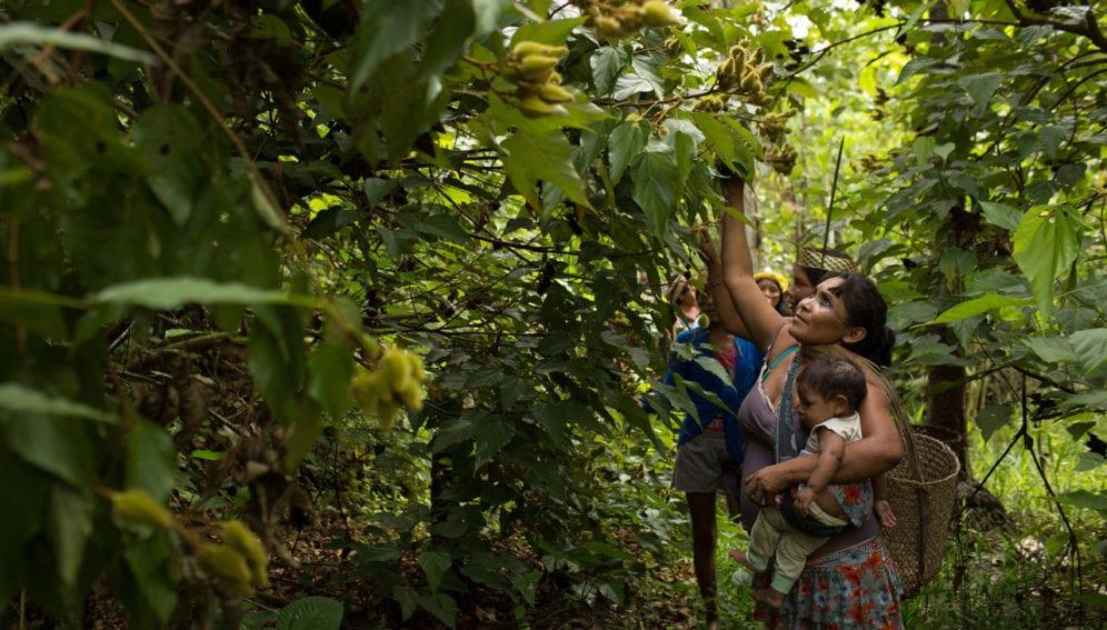 indigenas Amazonas1
