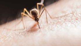 Combinación de modelos para pronosticar dengue